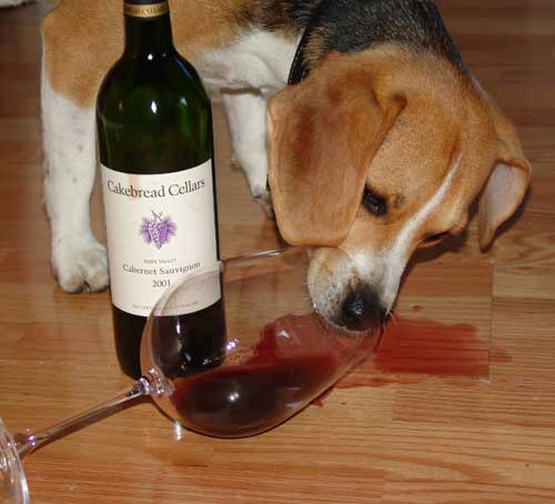Buddy and Cakebread