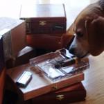 Buddy with Cigar
