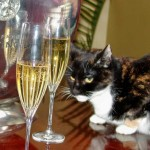 Pezzy with Champagne